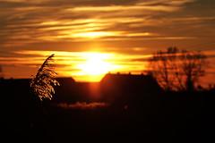 Sonnenuntergang (gutlaunefotos ☮) Tags: sonnenuntergang schilf