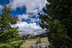 Beartooth Highway trees (m01229) Tags: unitedstates wyoming cody d7000 vision:mountain=0849 vision:outdoor=099 vision:sky=0727 vision:clouds=0568