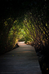 Bali - Mangrove Park - morning path (eduardopradana) Tags: morning bali indonesia mangrove