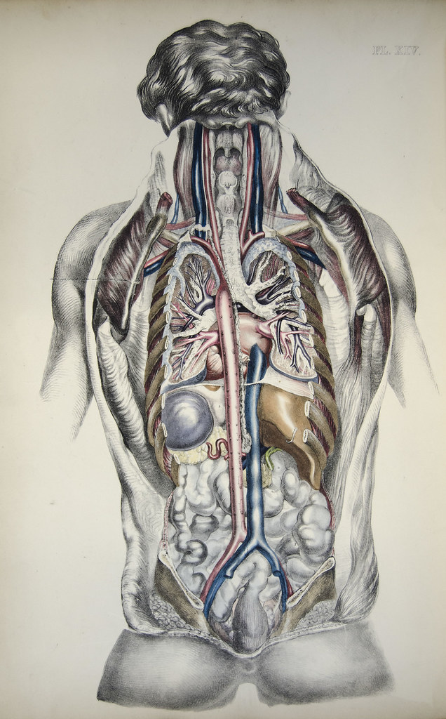 The Worlds Most Recently Posted Photos Of Organs And Skeleton