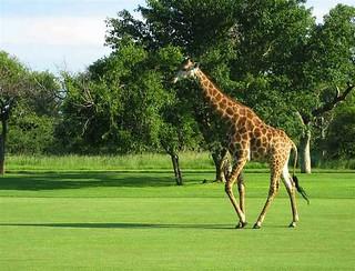 South Africa Hunting Safari - Mpumalanga 63