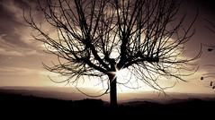IMG_1607 (Pedro Montesinos Nieto) Tags: atardecer otoo catalua sunbeams rayosdesol atardecerenlamontaa