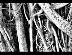 Abstract (Noura alramli) Tags: white black nikon اسود نيكون ابيض تجريد احادي