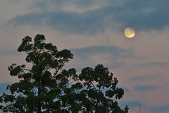 Lua (luisabertoli) Tags: pink blue sky moon plant tree planta nature night clouds natureza cu luna lua noite nuvem rvore