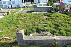 """I am the grass; I cover all"" (Key West (Florida) Trip, November 2013) 8016Ri 4x6 (edgarandron - Busy!) Tags: cemeteries cemetery grave keys graves keywest floridakeys florid"