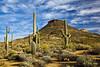 Wrangler trail (doveoggi) Tags: arizona cactus mountain clouds desert trail scottsdale saguaro 1205 mcdowellsonoranpreserve dailynaturetnc13