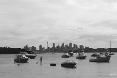 Paddle x boat x flight x Sydney (arnimangoes) Tags: city sea blackandwhite skyline boats nikon flight sydney cityscapes boating bnw d3000 paddleboarding australianfleet
