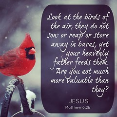 Do. Not. Worry. #Jesus #Matt6 #trust
