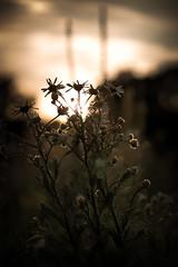 Abend an der Wildblumenwiese #1