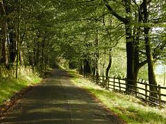Harmony (Lancashire Lass ...... :) :) :)) Tags: fence trees wood lane road sunshine light shadow september drystonewall dappledlight huntingtonhalllane dutton lancashire ribblevalley
