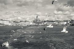Helsinki (T4RM0) Tags: helsinki finland canon 5d markii landscape buildings sea seaguls