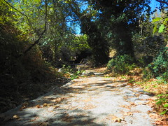 (Psinthos.Net) Tags: psinthos     valley psinthosvalley nature   countryside sunnyday day   noon      treebranches trees planetrees     planetree treetrunk treetrunks    tree leaves    autumnleaves fallenleaves   path rivulet   paved stones    bluesky sky light sunlight    wildivy  figtree brambles     rocks shadow     september autumn