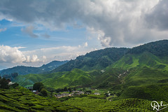 DSC_0079 (Dinesh Parate) Tags: scenic beauty landscape teaplantation hill station sky blue greenery mountains nature