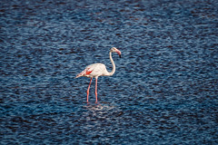 Huelva Marismas del Odiel (grzegorzmielczarek) Tags: andalucia flamenco flamingo huelva marismasdelodiel provinciadehuelva salinas espaa flamencocomn