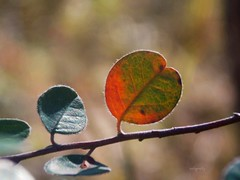 be different ... I have a colorful heart #Nikon (.natia.) Tags: natigraphy autumn colorful leaves view macro warm day idea creative love heart beautiful light