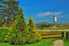 Zlatibor (Todorovic Srecko) Tags: pine pines mountain zlatibor serbia srbija canon canon1200d 1855 planina