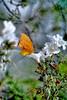 Aromatherapy (vgphotoz) Tags: vgphotoz butterfly aromatherapy arizona insect spiritofphotography friends