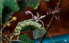 Unknown (creati.vince) Tags: andhra creativince fauna horsleyhills travel trip catterpillar