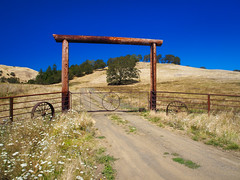 Oregon Summer on the Ranch (RobertCross1 (off and on)) Tags: 1250mmf3563mzuiko cascaderange cascades douglas em5 glide omd or olympus oregon pacificnorthwest roseburg bluesky fence grass grassland oak ranch trees landscape road rural northumpqua