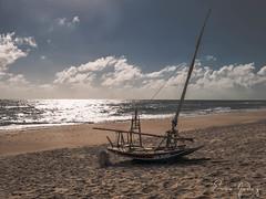Fortaleza/CE - Raft - Sea Lion (Enio Godoy - www.picturecumlux.com.br) Tags: niksoftware viveza2 beach portodasdunas vacations travel beachpark journey jangada aquirazce g15 canon fortalezace canong15 raft
