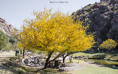 Capilla del Monte - El Paraso (NatyCeballos) Tags: arbol yellow amarillo naturaleza airelibre planta tree nikond7000 nikon elparaiso capilladelmonte nature