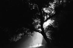Lost in Light (Blurmageddon) Tags: 35mm film analogphotography blackandwhite ilford sfx200 fomadonexcel micronikkor55mm filmdev:recipe=11080 ilfordsfx200 fomafomadonexcel film:brand=ilford film:name=ilfordsfx200 film:iso=200 developer:brand=foma developer:name=fomafomadonexcel