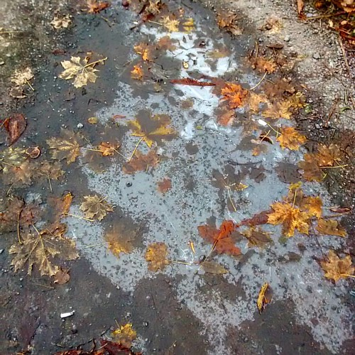 На улице трещит сибирский мороз (- 2С). Листья замёрзли в луже.