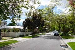 Southern Bayside Melbourne, AUSTRALIA (brandonquatro) Tags: bayside southernbaysidemelbourne spring2016 spring leafy suburbia