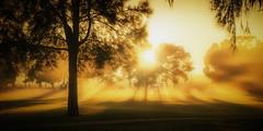 Foggy Sunrise (Cropped) (@) Tags: fog swamp carine openspace ngc