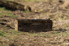 Piece of wood (Lluniau Clog) Tags: wood shore shoreline marinedrive southport
