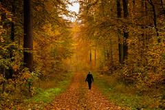 Ein Wald, sechs Bearbeitungen (pyrolim) Tags: wald waldweg bltter bund spaziergngerin spaziergang forest fall bearbeitungen lightroom