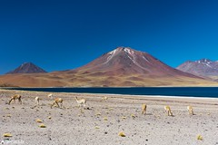 The view - Laguna Miscanti (Captures.ch) Tags: 2016 animals black blue bushes capture chile desert gray green hills lagoon lagunamiscanti lake landscape mountain nature october orange perfect red rocks sand sky sun travel water white yellow