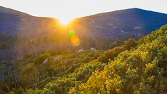 Cuyamaca Rancho Vista (shimonkey) Tags: yellow cuyamaca rancho park view lensflare landscape vista