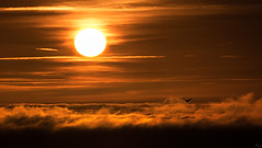 'All that glitters' (Anthony Goodall) Tags: sun sunrise sunlight sunshine surreal bird clouds cloudscape landscape light sky above flying dreamlike