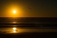 LRL_0429-web (doolittle-photography.com) Tags: nikon d600 nikpond600 80200 nikon80200 fullframe fx ocean sea pacificbeach sunset
