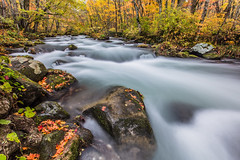 Stream in Autumn  (Sharleen Chao) Tags: nationalpark japan aomori autumn maples cpl canon 5dmarkiii 1635mm        cloudy day longexposure stream      travel