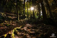 L'automne dans la foret des Dioux - Copyright Bruno Lavit (kazimodo38) Tags: automne cascade chartreuse dioux plateau sainthilaire