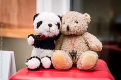 Expandalonga and Flávia Morari's teddy bear, Tango Factory, Brussels, June 2016