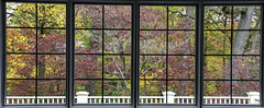 Backyard Autumn (C. P. Ewing) Tags: autumn fall window season seasonal landscape backyard color colorful leaves tree trees plants flowers nature outdoor natural scenery beautiful beauty autoremovedfrom1to5faves