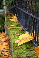 (CanMan90) Tags: autumn fence friday iron leaves moss colours victoria britishcolumbia vancouverisland canon rebelt3i rockland outdoors closeup