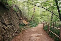 (Doug J.) Tags: canon eos rebel g film 35mm sigma2880mm fujifilm fuji superia 400 xtra forest woods nature hike trail path fence walk trees