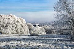 Winter is Coming (chriz77ii) Tags: a6000 laea3 sal1650 winter frost