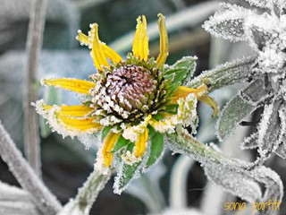 little frosty explore