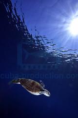 2012 11 METTRA OCEAN INDIEN 4794