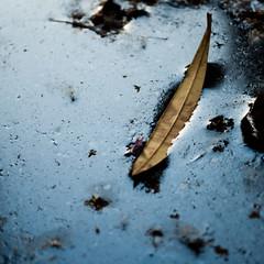 sink slowly (Vasilis Amir) Tags: abstract reflection leave square puddle mud bokeh أمير bestcapturesaoi mygearandme vasilisamir