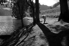DSC_8207 (Anggi Anggoman) Tags: street shadow blackandwhite woman mountain lake indonesia photography streetphotography jurnal mountsemeru eastjava shalat ranu ranukumbolo anggianggoman