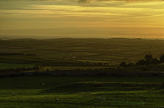 Birkrigg Common at sunset (kidda63) Tags: