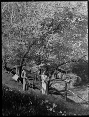 Almond blossoms near Montecute (State Records SA) Tags: blackandwhite photography australia historical southaustralia frankhurley srsa staterecords staterecordsofsouthaustralia staterecordsofsa