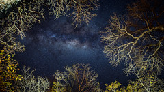 Galaxy@Botswana bush (Wim Storme) Tags: