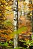 (kuuan) Tags: fall colors leaves austria herbst 85mm olympus mf f2 zuiko manualfocus fzuiko autums f285mm olympusfzuikoautotf285mm